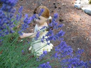 Lavender 024